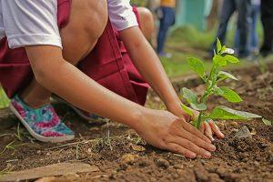 Zwei Hände eines Mädchens formen Erde an den Stil eines kleinen Pflänzchens in einem Beet.