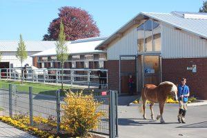 Leon führt einen Haflinger über die Anlage. Die anderen Pferde schauen ihnen nach.
