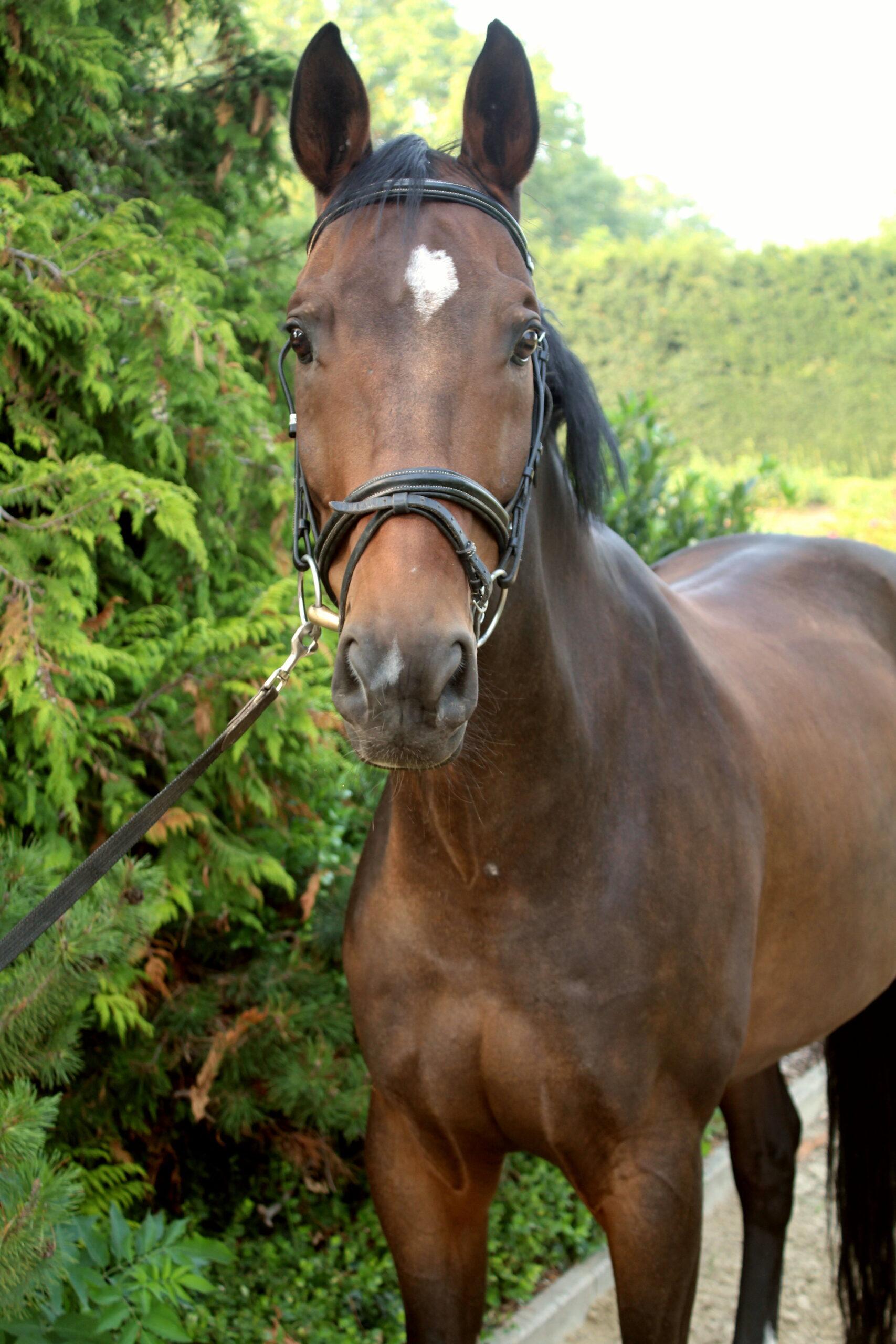 Braunes Pferd mit weißem Abzeichen.