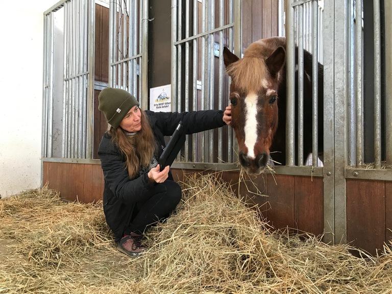 Ein braunes Pony frisst Heu und wird dabei von einer Frau gestreichelt, die ein Tablet in der Hand hält.