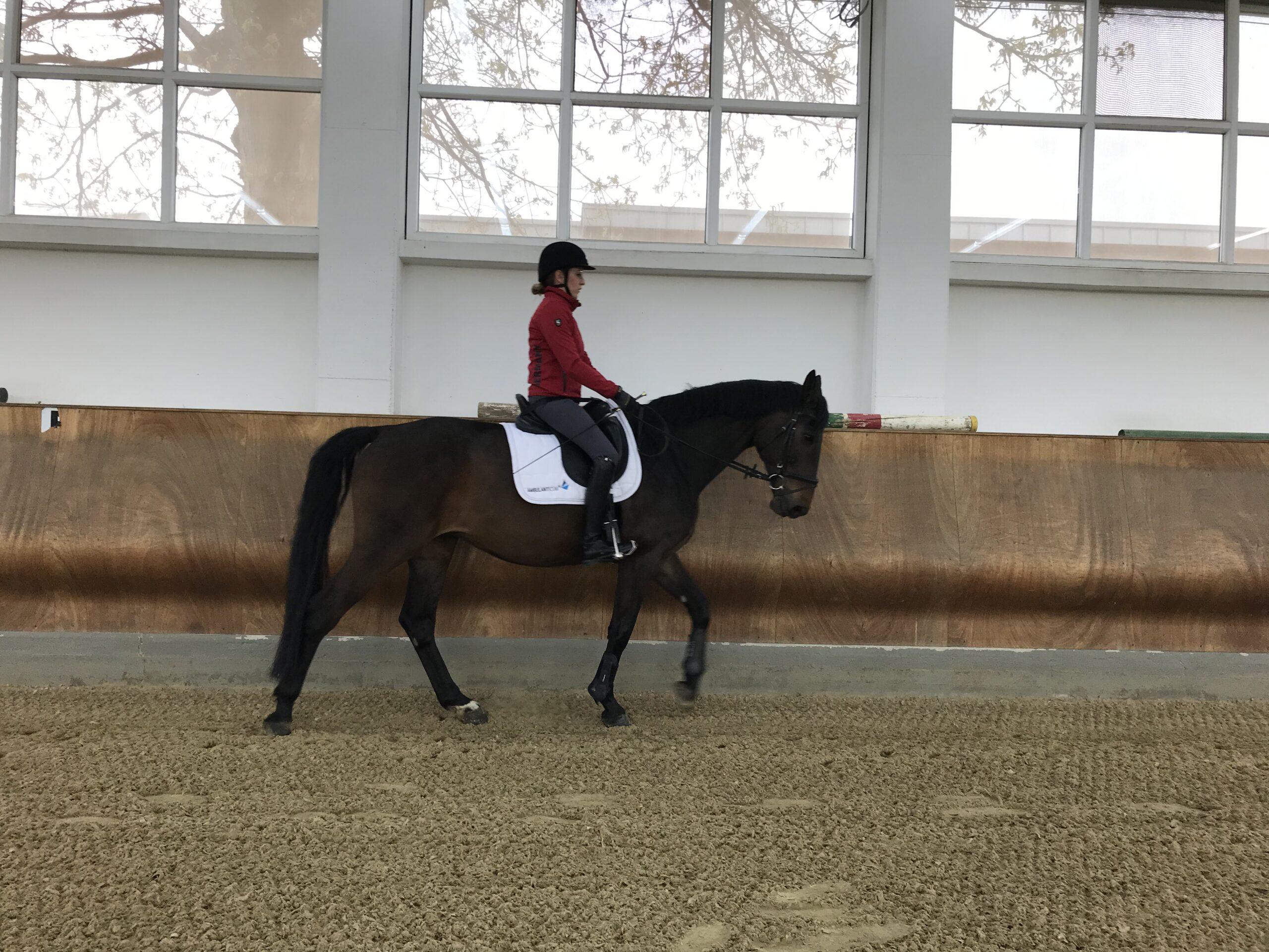 Eine Reiterin sitzt auf einem Pferd und reitet in einer Reithalle.